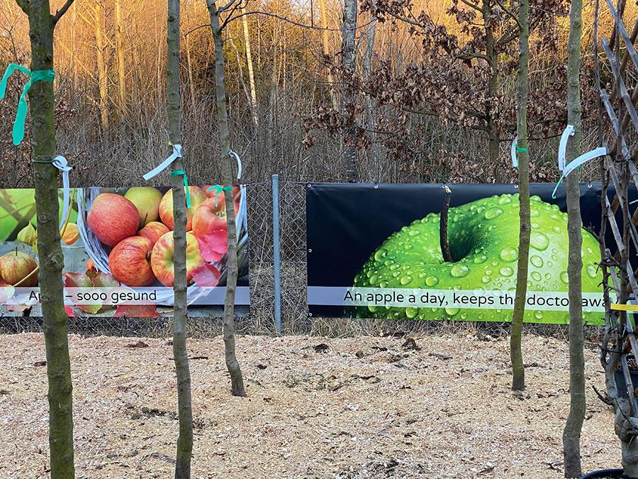 Apfelbäume für München