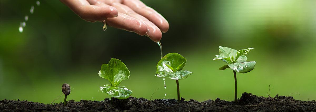 Automatische Gartenbewässerung München