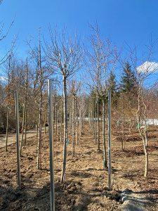 Bäume für den Umweltschutz