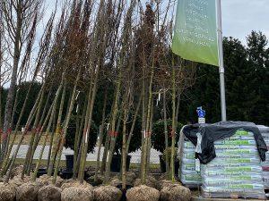 Bäeme für den Umweltschutz in Gartenwelt