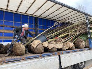 Bäeme für den Umweltschutz von LKW abladen