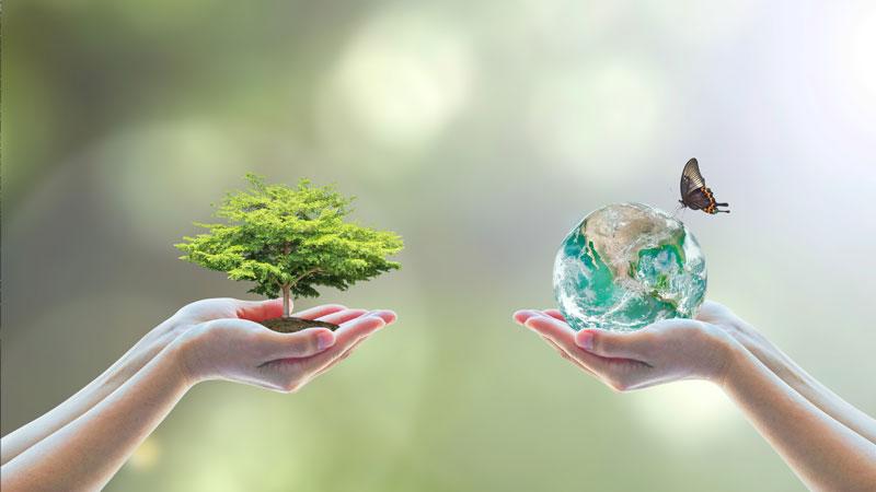 Bäume sind unser Sauerstoffproduzent