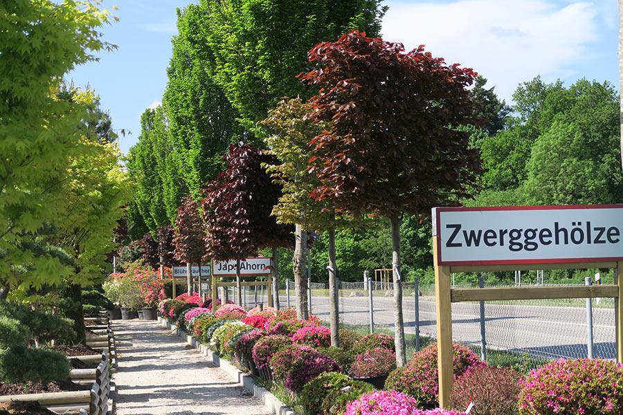 Baumschule bei München