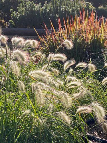 Blüten und Gräser im Herbst