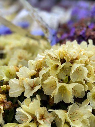 Blütenpower in der GARTENWELT bei München