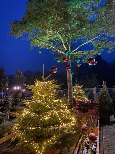 Die Gartenwelt zur Weihnachtszeit