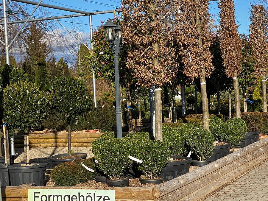 Formgehölze Baumschule München