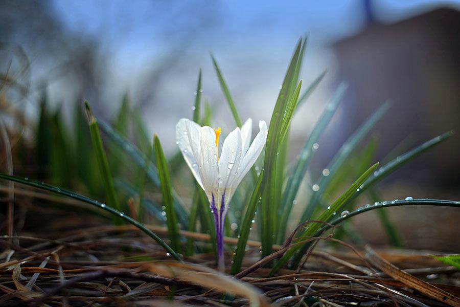 Frühlingserwachen Blüten