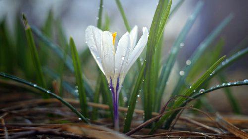 Frühlingserwachen in der GARTENWELT