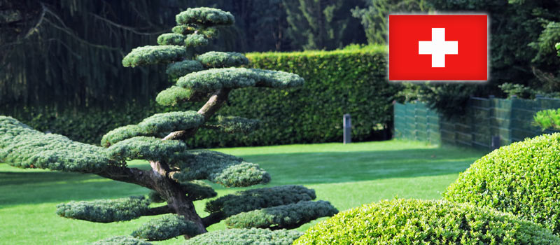 Gartenbonsai für die Schweiz