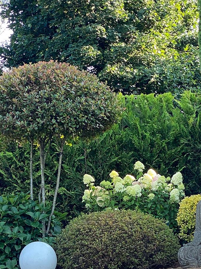 Gartengestaltung mit Kiefern