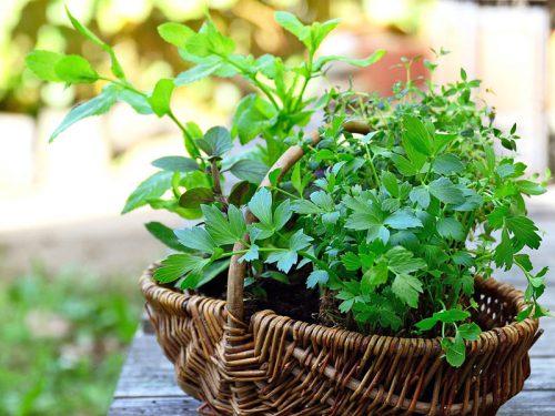 Gartenkräuter in der GARTENWELT