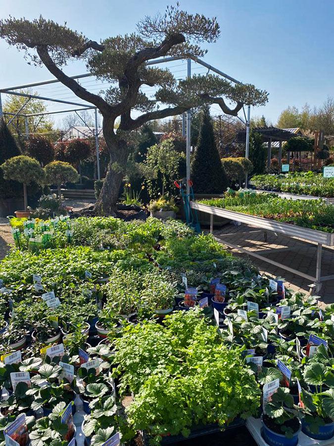 Gartenwelt Scheller Kräuter Gemüsepflanzen
