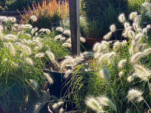 Gräser in der GARTENWELT