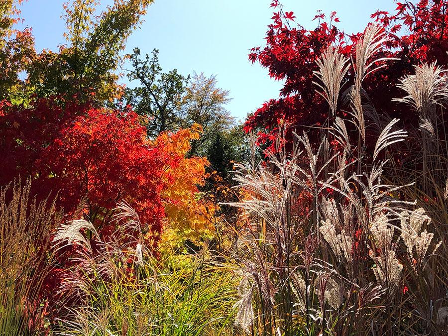Herbst ist Pflanzzeit