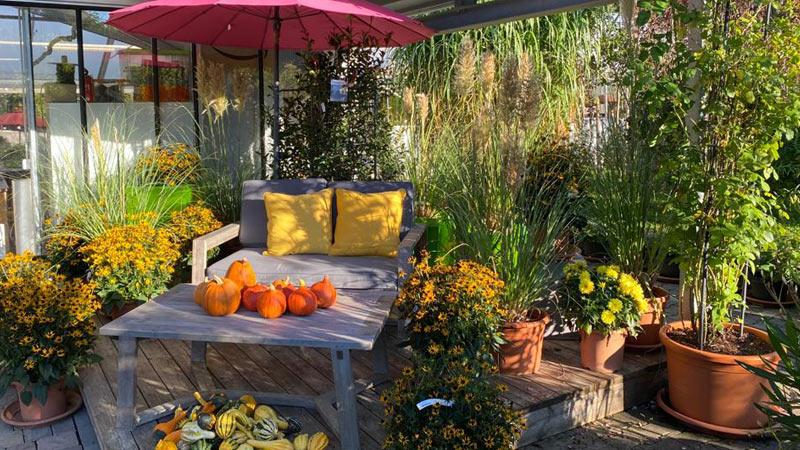 Herbst ist die beste Pflanzzeit