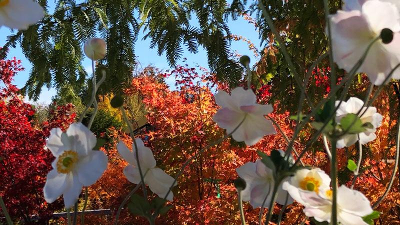 Herbstblühende Pflanzen