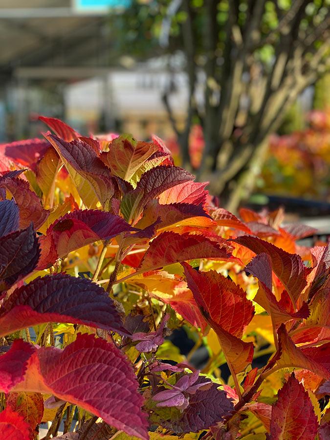 Herbstimpressionen aus der GARTENWELT bei München