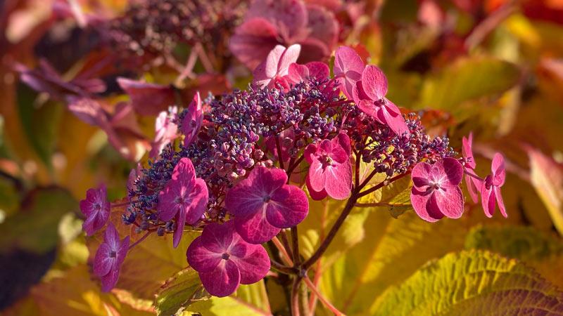 Herbstimpressionen aus der Gartenwelt