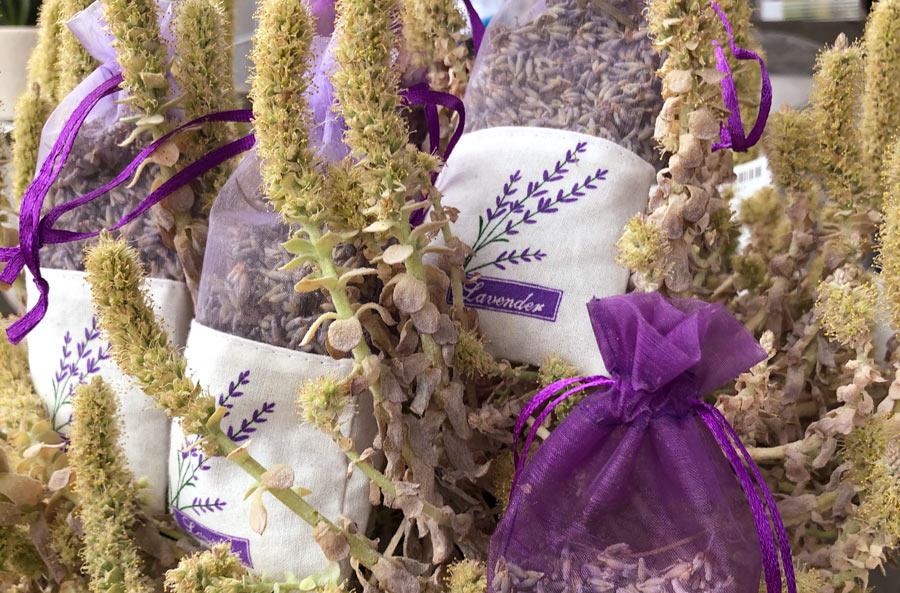 Lavendel von der Gartenwelt Uwe Scheller bei München