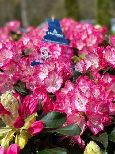 Muttertagsblumen in der GARTENWELT