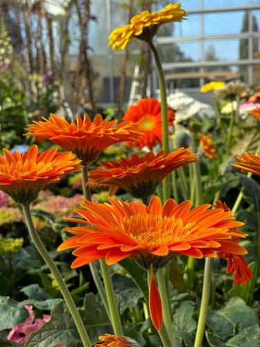 Neue Pflanzen in der GARTENWELT eingetroffen