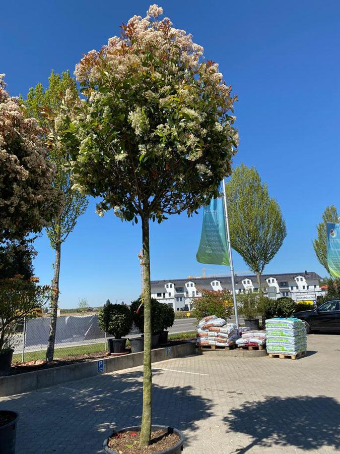 Neue Pflanzen in der Gartenwelt bei München