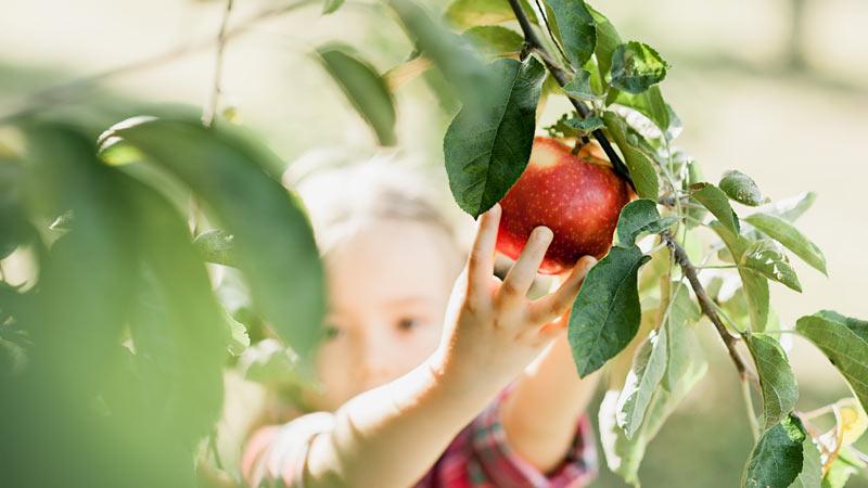 Obstgehölze und Beerensträucher reduziert