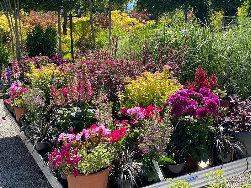 Pflanzen Marktplatz in der Gartenwelt bei München