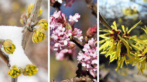 Pflanzen des Monats Februar / März