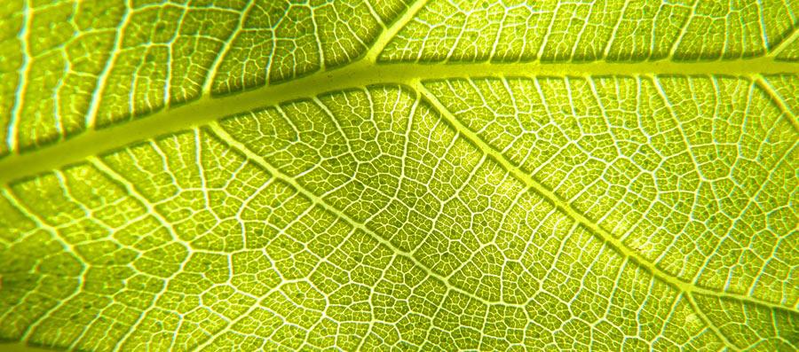 Photosynthese stellt Sauerstoff her