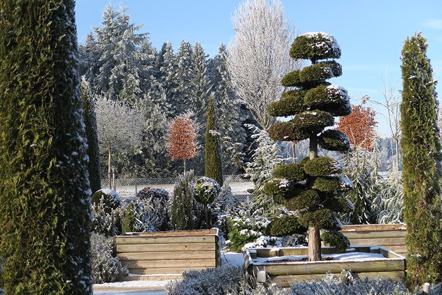 Winter in der Gartenwelt Scheller bei München - Baumschule