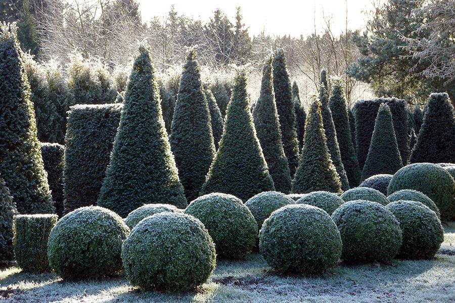 Winter in der Gartenwelt Scheller bei München - Formgehölze