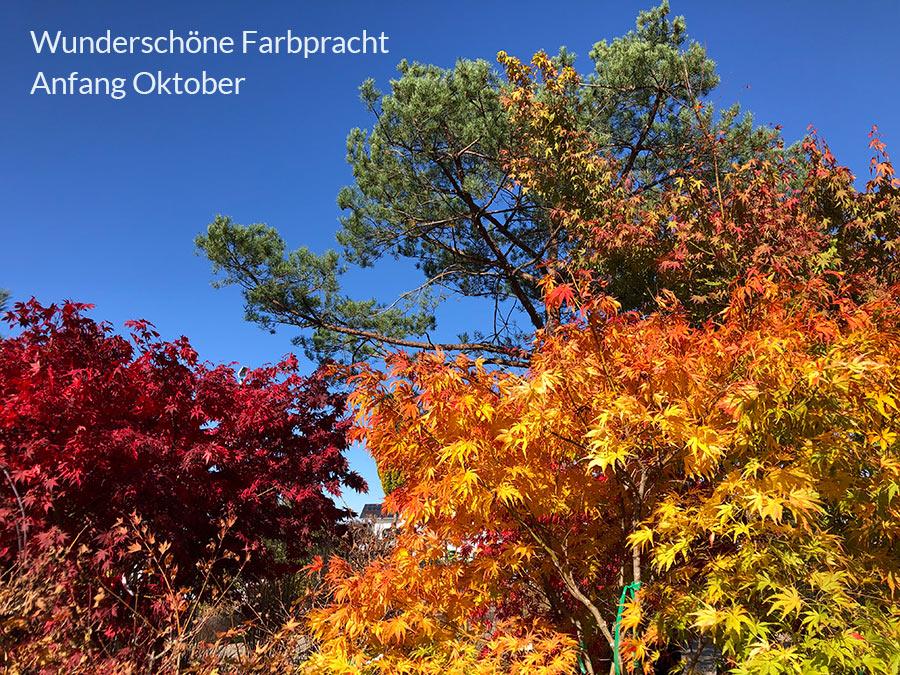Wunderschöne Farbpracht Anfang Oktober