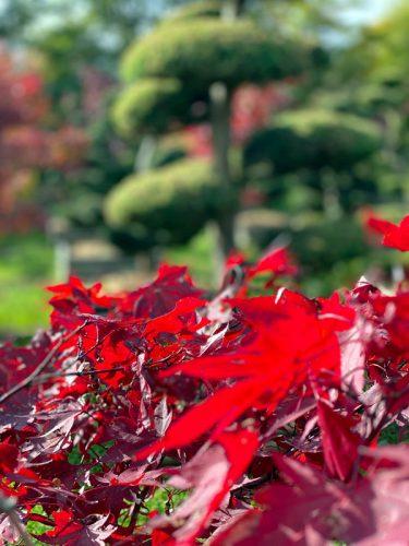 Der Herbst ist die beste Pflanzzeit