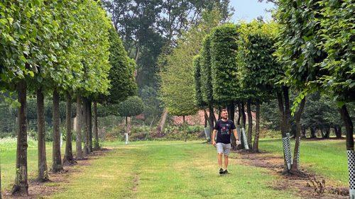 Solitärbäume, XXL-Plants und weitere große Grüne